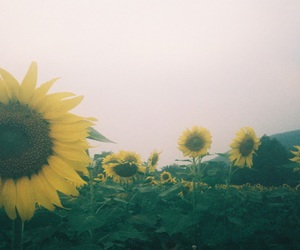film, sky, and sunflower image