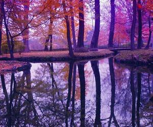 nature, tree, and beautiful image