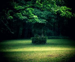 nature, kiel, and photography image