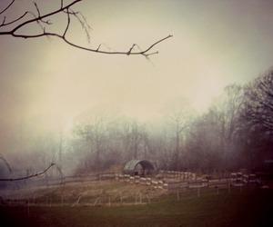countryside, foggy, and marina hoff image