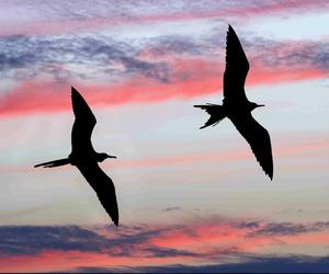 birds, dreamy, and sky image