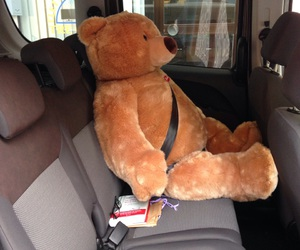 auto, bear, and big image