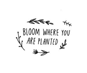 quotes, bloom, and flowers image