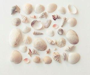 shell, summer, and seashells image