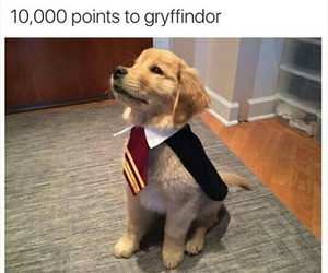 cute, dog, and gryffindor image