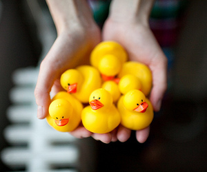 hands, rubber ducky, and photography image