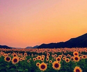 calm, sun, and flower image