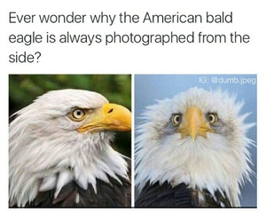 funny, lol, and america image