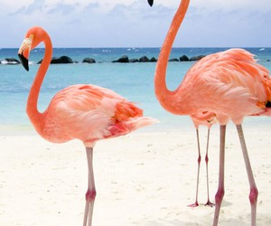 beach, flamingo, and animal image