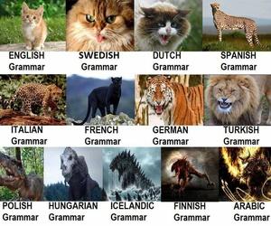 arabic, dutch, and english image