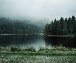 fog, forest, and lake image