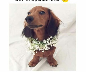 animals, dog, and filter image
