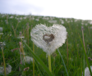 blue, nature, and dandelion image