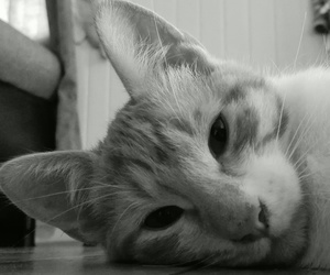 black & white, cat, and cats image