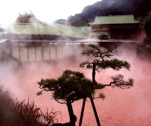 pink, nature, and pale image