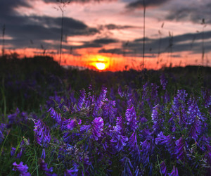 flowers, sunset, and travel image