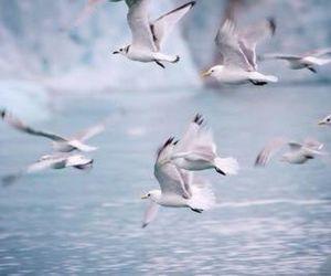 bird, sea, and white image