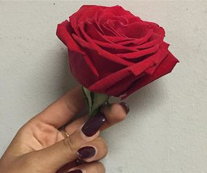rose, nails, and red image