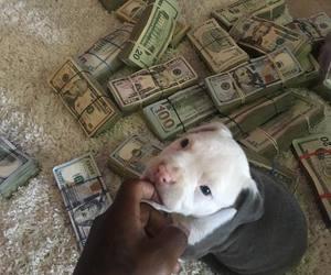money and dog image