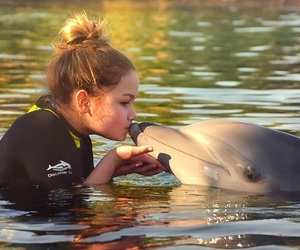 animal, dolphin, and life image