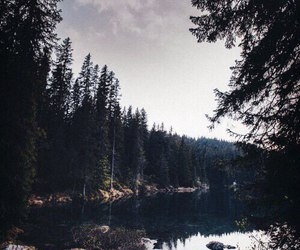 nature, woodland, and quiet image
