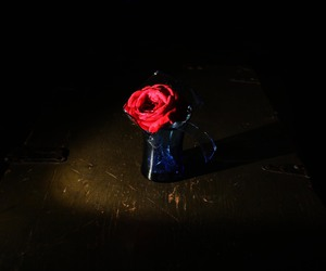 broken, glass, and rose image