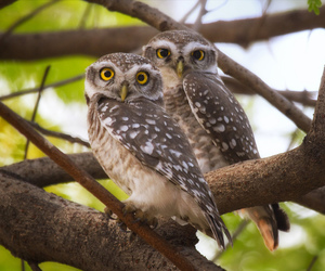 bird, owls, and owlets image