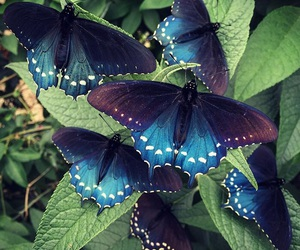 butterfly, nature, and insect image