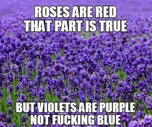 violets, rose, and funny image