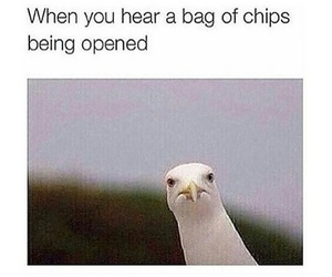 funny, chips, and food image