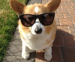 dog, glasses, and sunglasses image