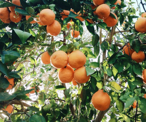 orange, green, and fruit image