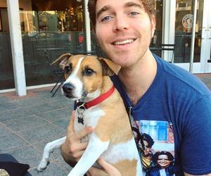 dog, sweet, and youtube image