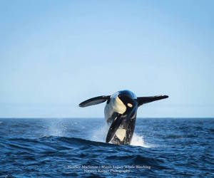 living, oldest, and orca image