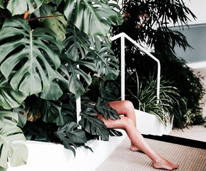 legs, green, and plants image