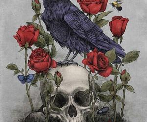 skull, rose, and bird image