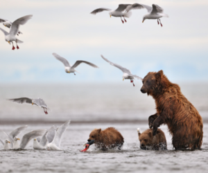 bear, animal, and birds image