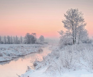nature, white, and winter image