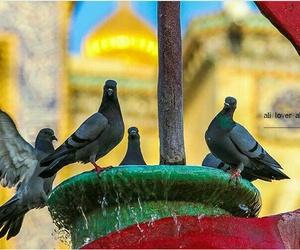 شيعي, يااعلي, and كلماات image