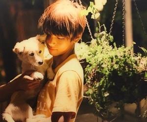 dog, 뷔, and v image