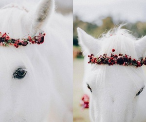 flowers and horse image