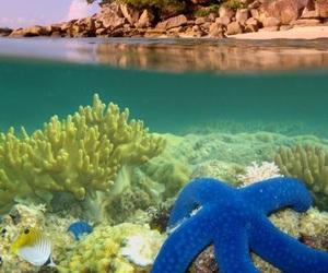 fabulous, sea, and ocean image