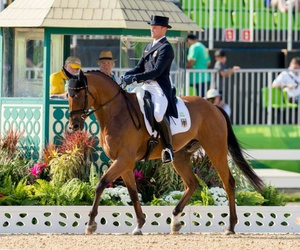 dressage, horse, and olympics image