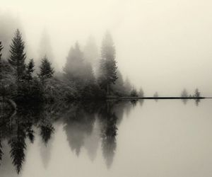 nature, fog, and tree image
