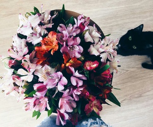 flowers, bouquet, and cat image