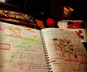 anatomy, doctor, and medicine image