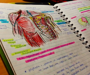 anatomy, med student, and exams image