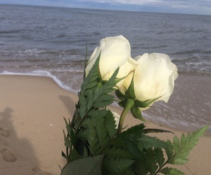 rose, beach, and aesthetic image