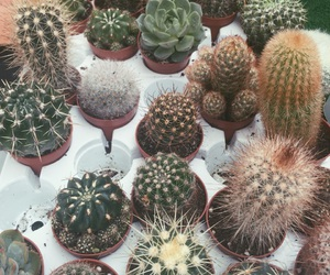 awesome, cactus, and chic image