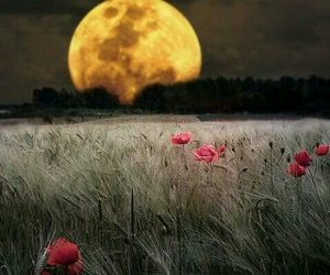 moon, night, and flowers image
